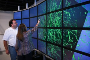 Alessandra Angelucci (right), a University of Utah professor of ophthalmology and visual science, and University of Utah computer science professor Valerio Pascucci stand in front of a computer model of a cluster of neurons scanned from a primate's brain. They have developed software that maps out a monkey's brain and more easily creates a 3-D model, providing a more complete picture of how the brain is wired. This method of visualizing the brain could help medical researchers better understand what happens to the human brain after it is affected by conditions such as autism, depression, anxiety or retinal degeneration.