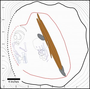 An illustration of an 11,500-year-old grave in central Alaska that contained a rare double burial of two infants dating to 11,500 years ago. Outlines of the two sets of remains are shown at left and center. Also found in the grave were a stone cutting tool, above center, and animal antlers with spear points, right of center.
