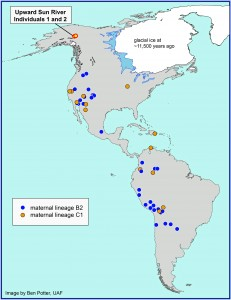This map shows the location of the Upward Sun River site in Alaska where the remains of two infants were found in an 11,500-year-old burial. A new University of Utah analysis shows the infants belong to two genetic groups or lineages known as B2 and C1. The maps shows other Native American groups throughout the Americas that are part of the same lineages.