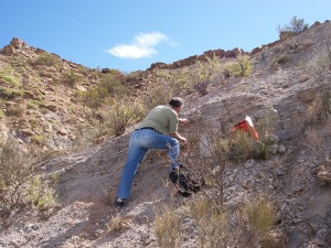 Co-author Farid Chemale samples a volcanic ash layer (tuff) in the Chañares Formation for radioisotopic dating.
