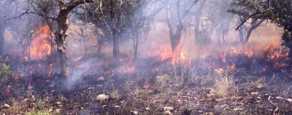 Anthropogenic burning in Hadza country.
