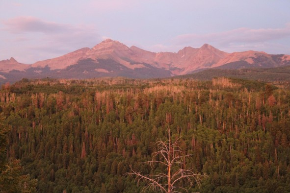 Dead trees on the San Juan National Forest near Mancos, Colorado, July 2013.