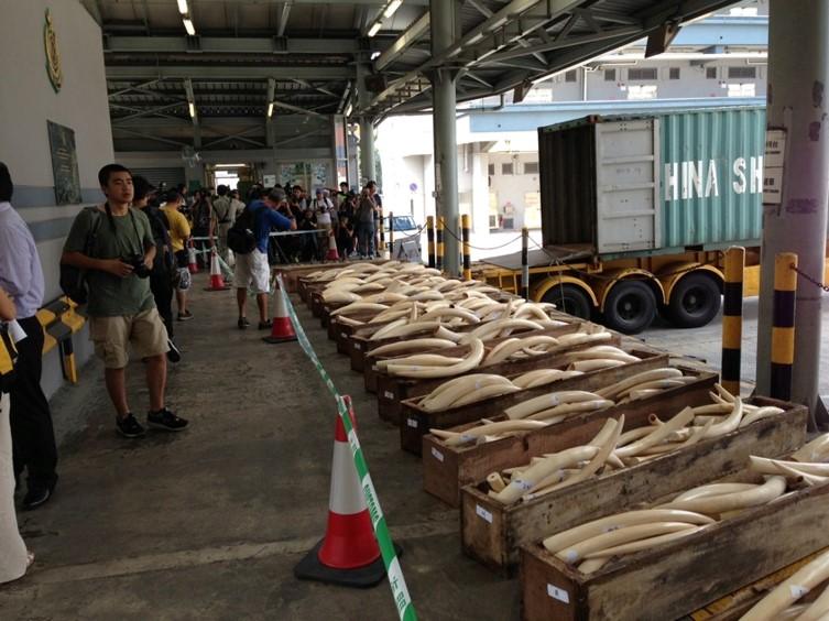 Seizure made in Hong Kong, August 2013, weight 2.2 tones.