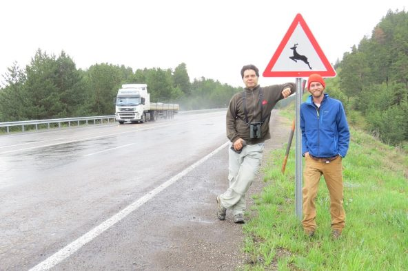 Cagan Şekercioğlu and Mark Chynoweth at a wildlife crossing sign along the Kars-Erzurum highway that bisects Sarıkamış Forest.