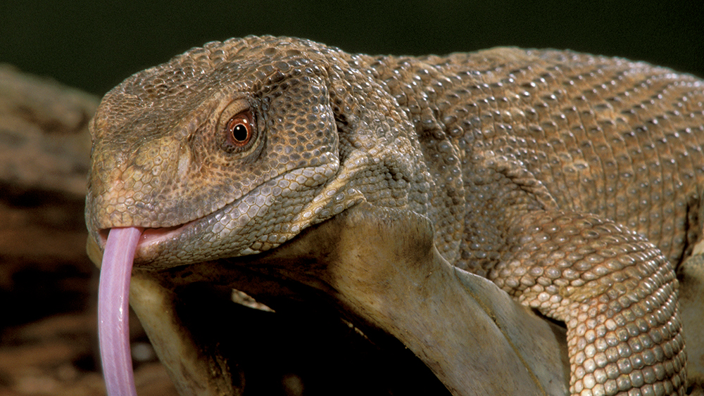 Following the lizard lung labyrinth | UNews