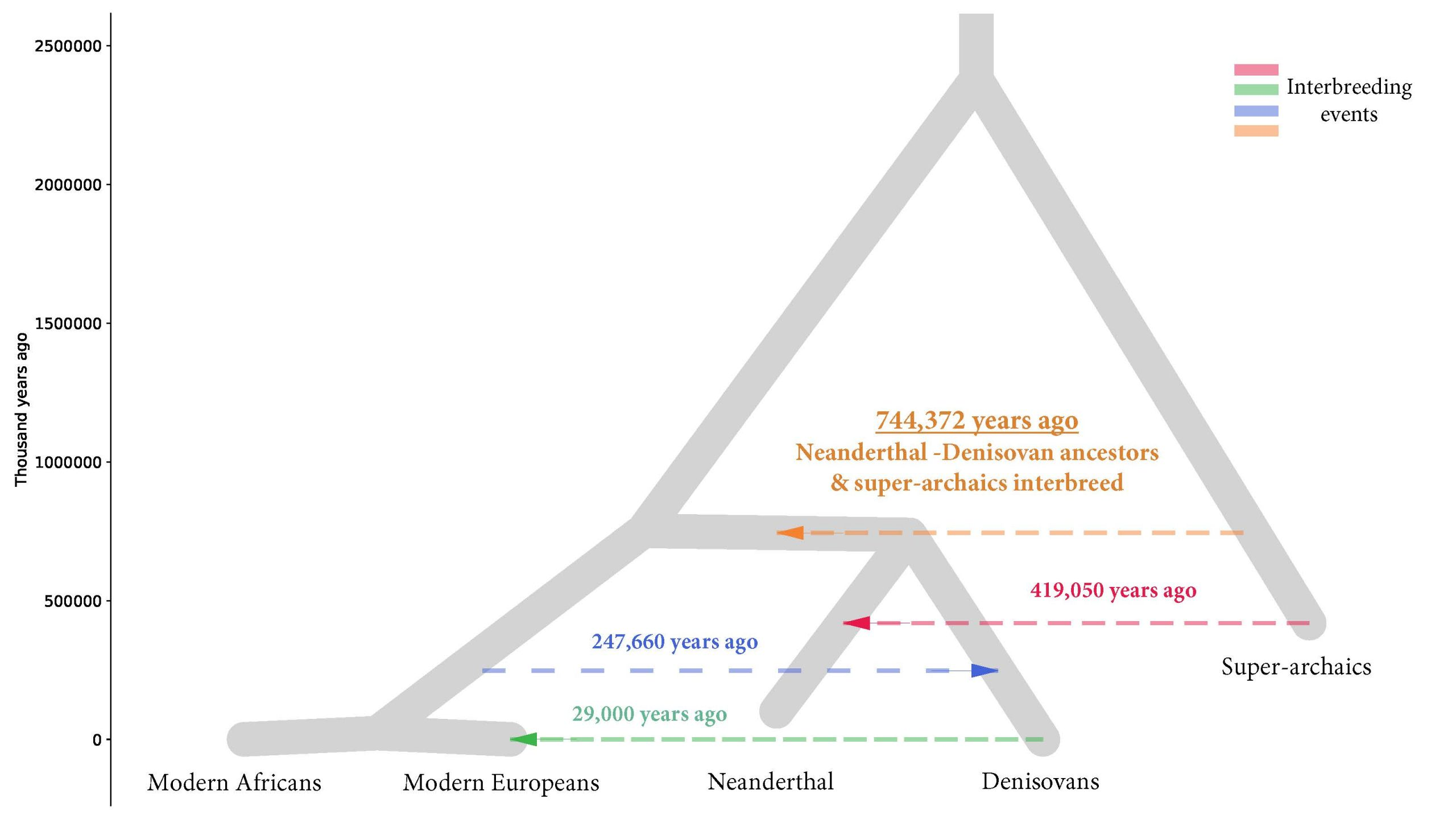 An evolutionary tree including four proposed episodes of gene flow. The previously unknown event 744,372 years ago (orange) suggests interbreeding occurred between super-archaics and Neanderthal-Denisovan ancestors in Eurasia.